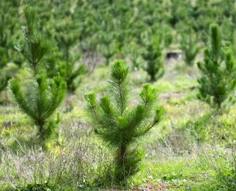 Mini Baum web kl