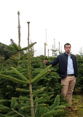 Timo Schwartz von Pflanzenhandel Schwartz in der Tannenbaumschonung